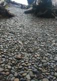 18 pebble path to rialto beach