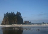16 second beach with gulls