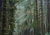 3 hoh forest
