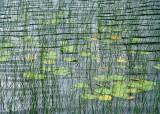 water, leaves, reeds