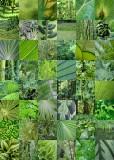13 green quilt