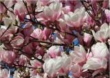 04 magnolia heaven