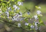07 simple spring