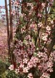 10 plum blossom branches