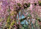 37 blossom heaven