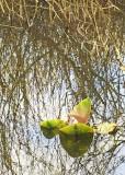 38 spring pond