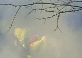 39 spring pond 2
