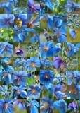 15 blue poppy quilt