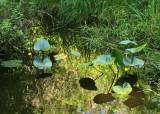 Shady pond at Elfendahl Pass