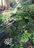 4 woodland vignette