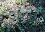 5 mushroom city