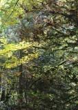 34 deciduous coniferous