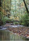 55 swan creek