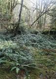 06 woodland floor