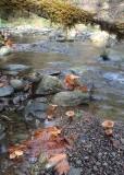 07 mushrooms at lilliwaup creek
