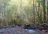11 low water at big creek