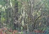 12 lichenland
