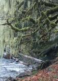 15 lichen moss tree