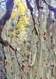 17 fall through the lichen window