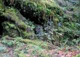 23 forest hillside