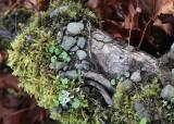 25 root landscape