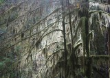 42 light through lichen