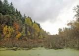 Snake lake fall