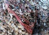 05 seaweed strands