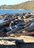 07 log beach