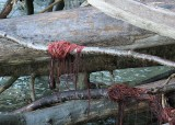 seaweed yarn