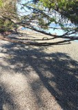 beach tree shadows