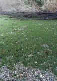 green seaweed beach