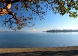 under the madrona