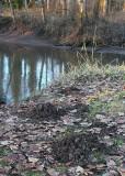moles like the river mud