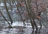04 wintry wetlands
