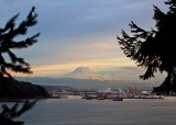 83 trees, mountain and the port of tacoma