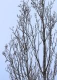 6 no snow, no birds, just plain branches