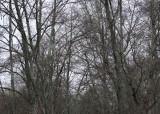 09 skeletal woodlands
