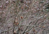 19 woodland drips