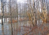 A Woodland Flood