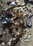 08 shells, seaweed, sand