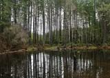 23 february beaver pond
