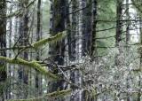 24 lichen and moss