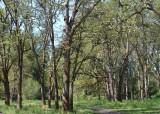38 oak savanna