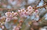 4 blooming