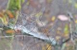 Woodland Webs