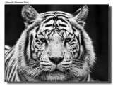 Zoo Pictures (NEW GALERY)