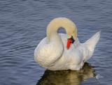Swan-2680.jpg