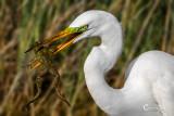 White Egret-8535.jpg
