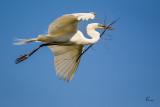 White Egret 9027.jpg